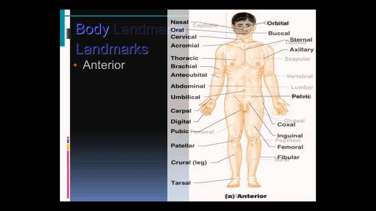 Chapter 1 The Human Body 1/2 - YouTube