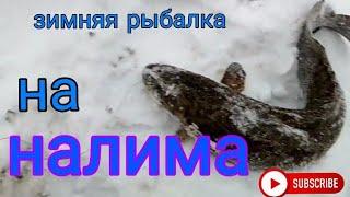 Зимняя рыбалка на налима Река Чумыш Алтайский край