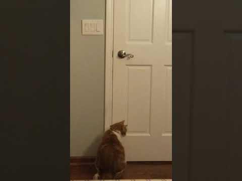 Cat Rudolf Opens The Door From Outside. Кот Рудольф открывает дверь снаружи