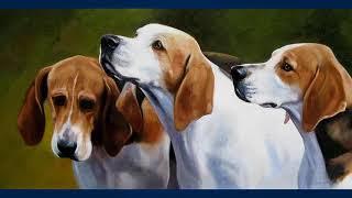 Фоксхаунд - порода гончих собак, выведенная в Великобритании для па...