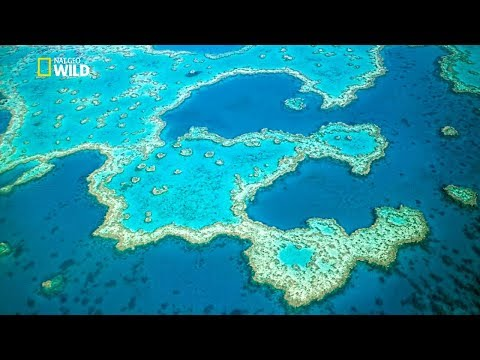 Great Barrier Reef [ National Geographic Documentary HD 2017