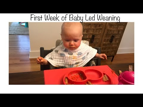 First Week of Baby Led Weaning at 6 months old Part 1