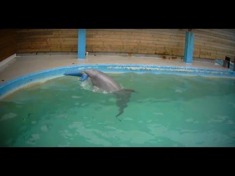 Undercover in Dolphinarium