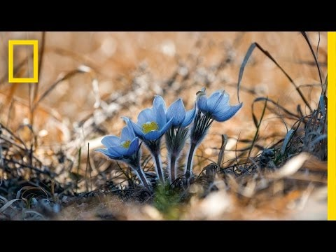 Photos: Watch Spring Bloom Before Your Eyes | National Geographic