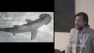 Magnetic sense: sharks do it, can we do it, too? — James Nestor at The Interval
