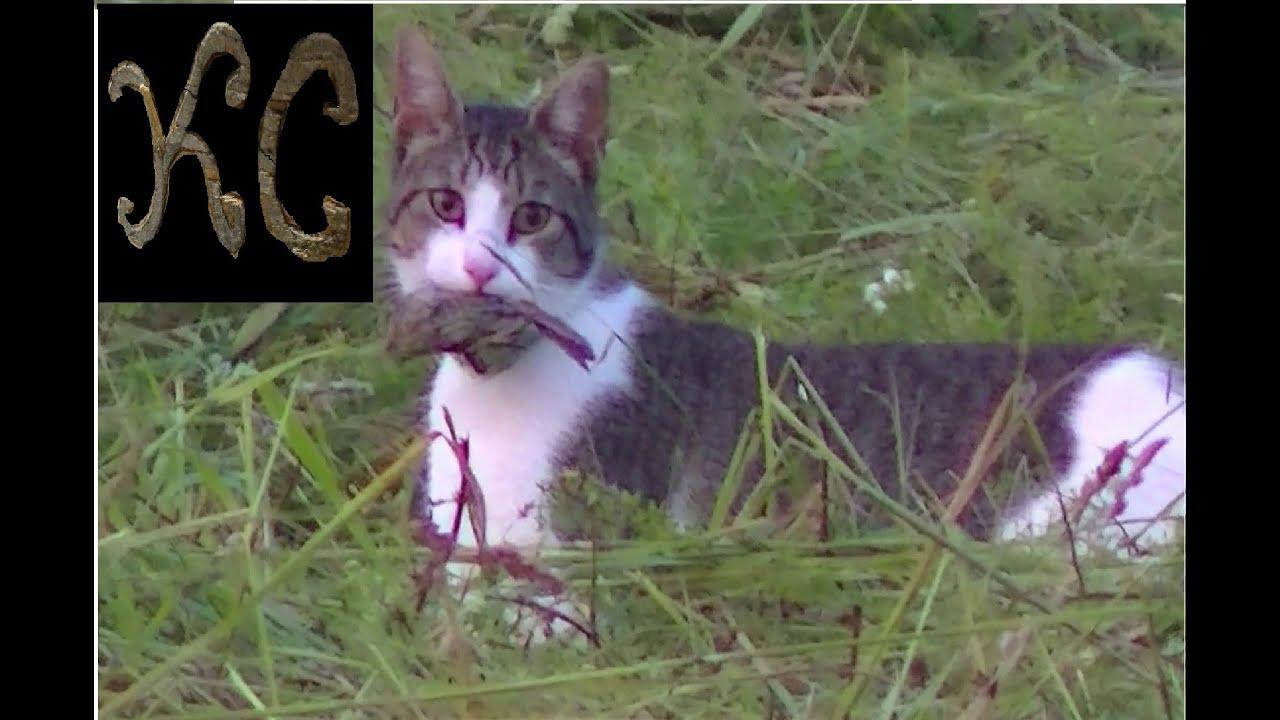 """CAT Catches Bird in Mid Flight """"Cat Vs Bird"""""""