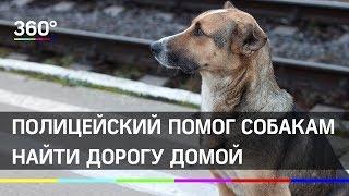 Инспектор ДПС помог собакам найти дорогу домой