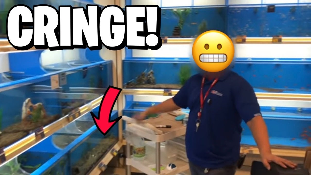 All Petsmart Fish Are Not The Same Here S The Proof Youtube