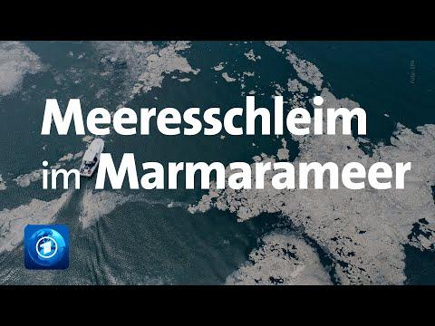 Türkei: Schleimplage im Marmarameer