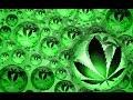 Исторические, научные факты о марихуане, а так же мнение ученых об этом растении.