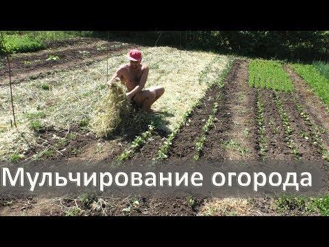Вопрос: Можно ли солому из-под томатов вносить в высокие грядки?