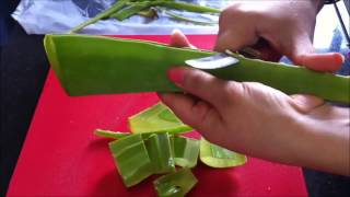 Diy Making Of Aloevera Gel Juice And Its Benefits Using Slow Juicer