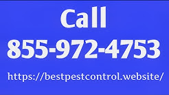 Pest Control Brooklyn - Exterminators Ct 06234
