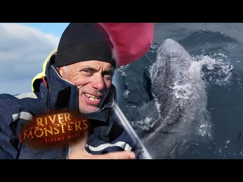 Fighting The Greenland Shark - River Monsters