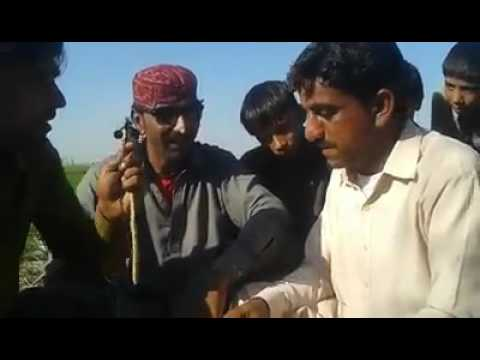 funny singing and poetry in sindhi. funny rahib