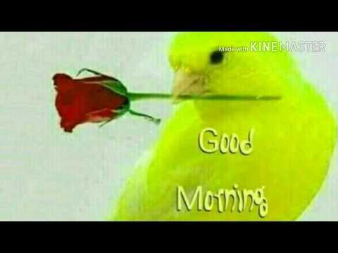 GOOD MORNING video - WhatsApp