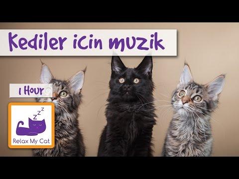Kediler için müzik - Kedi müzik kedi dinlenmek ve uyku yardımcı olmak için