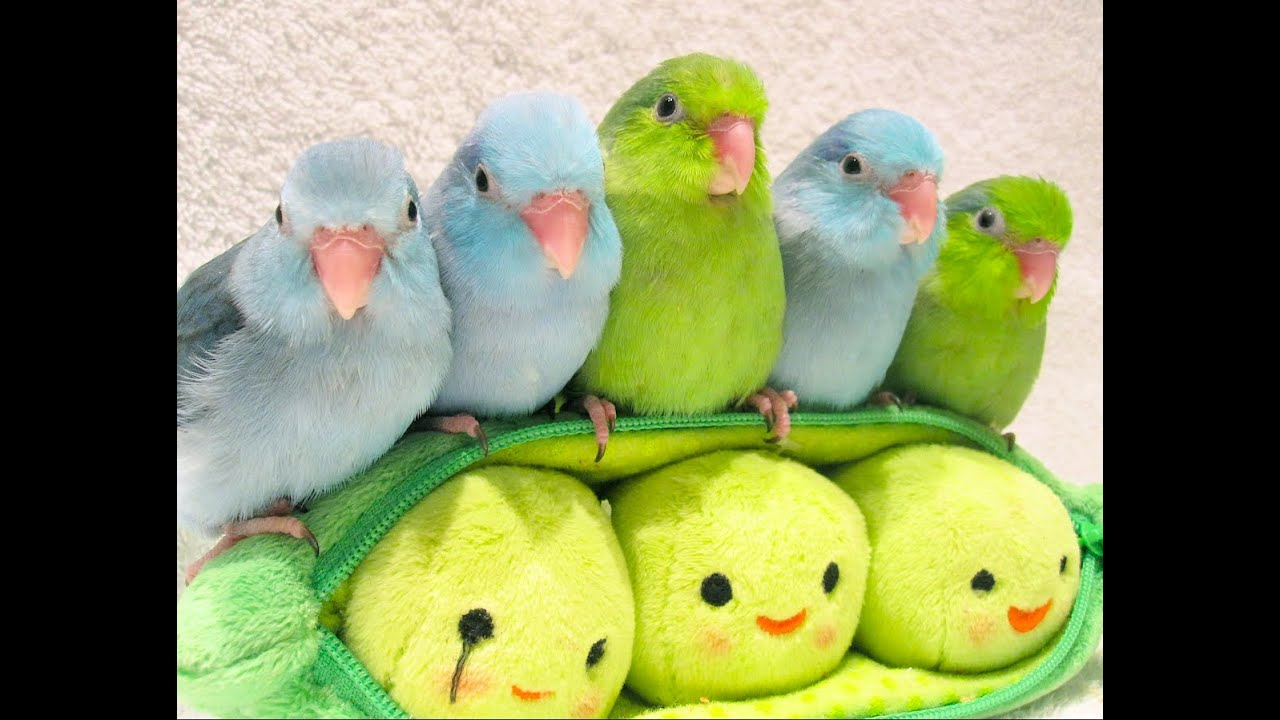 5 peas in a