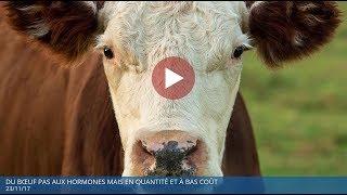 Du bœuf pas aux hormones mais en quantité et à bas coût - Polony TV