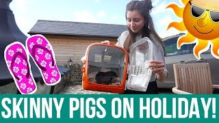 Skinny Pigs On Holiday!!