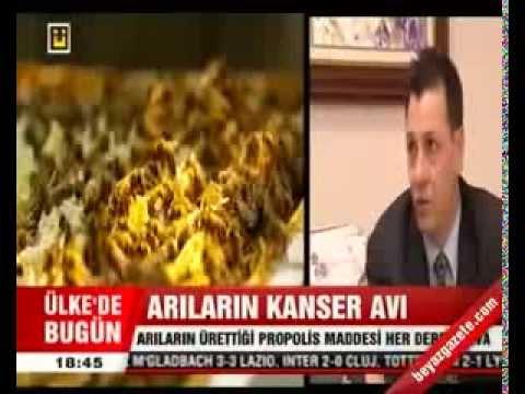 Arıların Kanser Avı Propolis