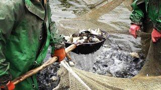Рыбаки поймали в СЕТИ 170 кг КАРПА в НЕРЕСТ Запустили рыбу в реку
