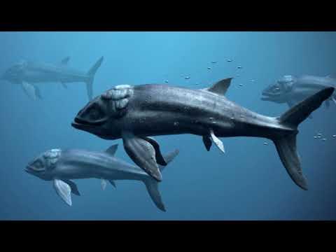 Эволюция рыб (рассказывает палеонтолог Ярослав Попов)