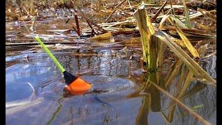 КАРАСИ ЛАПТИ НА ВЕЧЕРНЕЙ ЗОРЬКЕ Рыбалка на поплавок