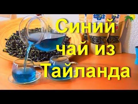 Синий чай из Тайланда: состав, как заваривать, польза