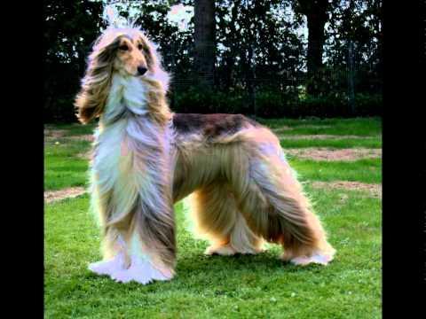 Породы собак фото и видео с названиями