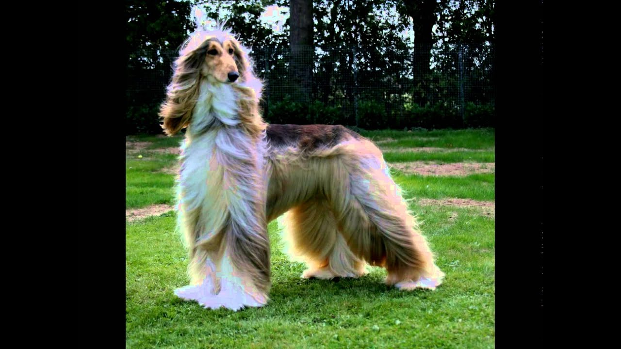 породы собак и фото с описанием