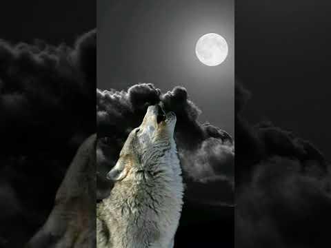 """""""Я одинокий волк"""" картинки под песню"""