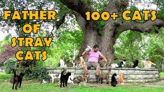 So cute 100+ stray cats.