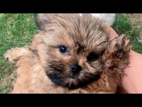 Thumbnail: CUTEST PUPPY EVER