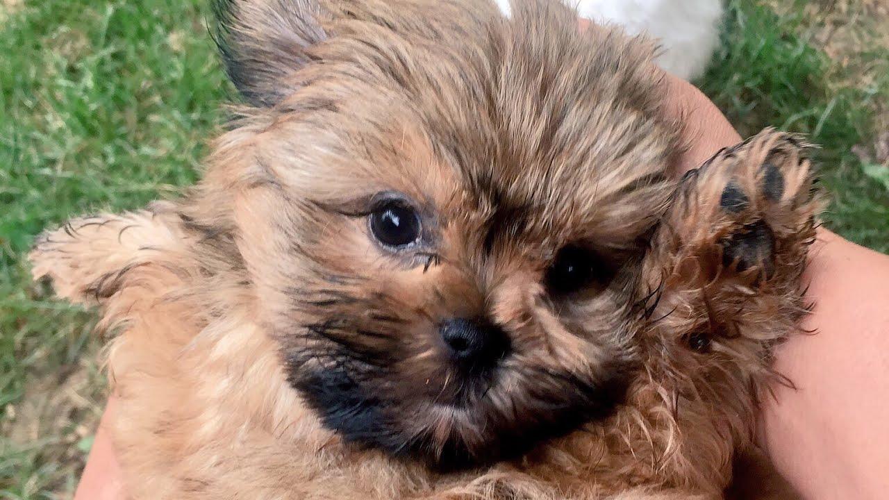 CUTEST PUPPY EVER | FunnyDog.TV