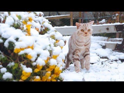 눈내리는 날에 고양이들과 외출했다.Cats see snow for the first time 雪の降る日に猫たちと外出した[SURI&NOEL]