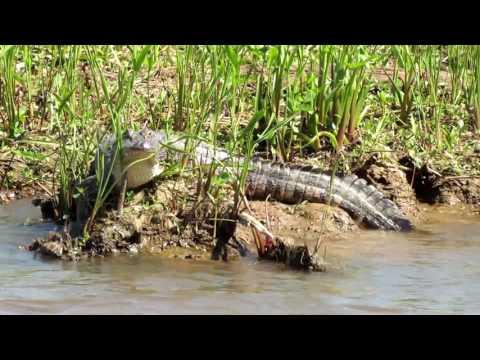 Swamp And River Tour, Orange Texas