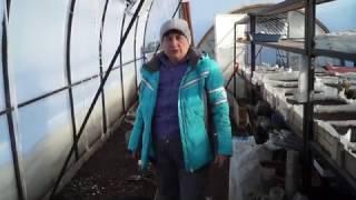 видео Хранение хризантем