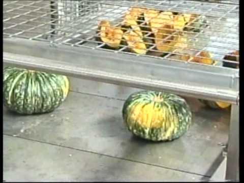 Purina Farms Halloween