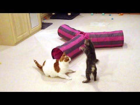 Funny & Cute Cat Moments (Video) | 4K
