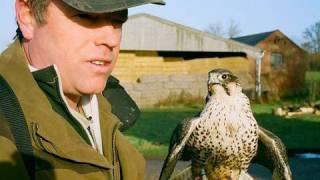 Proper falconry