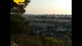 فيديو.. إطلالة على المسجد الأقصى في مدينة القدس المحتلة