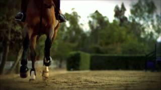 Лошади. Лошадь в замедленной съемке