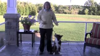 Train Your Dog To Stand On Cue!