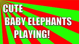 Cute Baby Elephant Video: Baby Elephant Playing in Pool and Cute Baby Elephant Running!