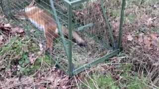 Heavy Duty Fox Trap - www.uktraps.co.uk