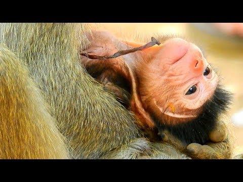 What happened why Newborn No movement ,Newborn baby weak ...