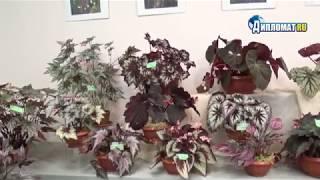 В Ботаническом саду открывается выставка «Многоликая бегония»