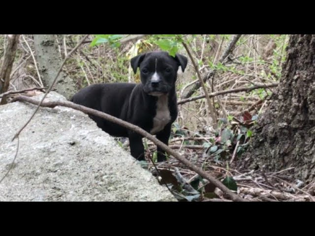 Tears of Joy – A rescue you have to see to believe by Stray Rescue of St.Louis