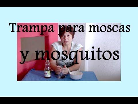 Eliminar malos olores y combatir moscas y mosquitos en tu - Eliminar moscas en casa ...